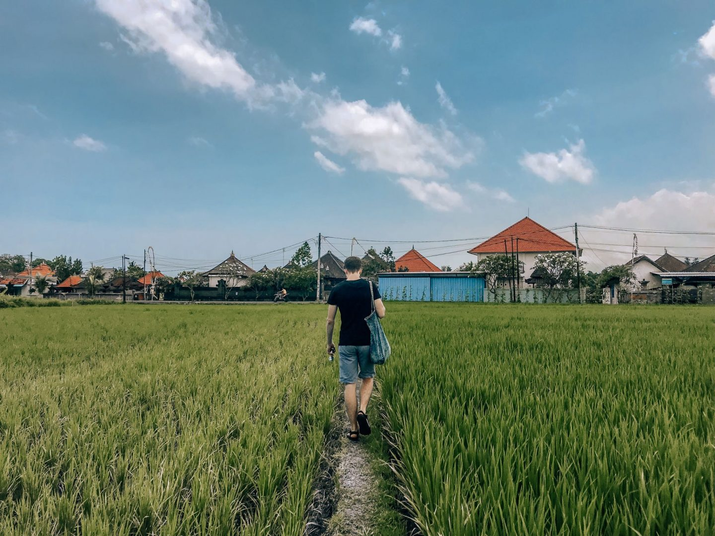 Rice Field Paddy Canggu Beach Bali Indonesia